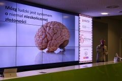 Mikołaj Dla Managera 2017 - mózg ludzki